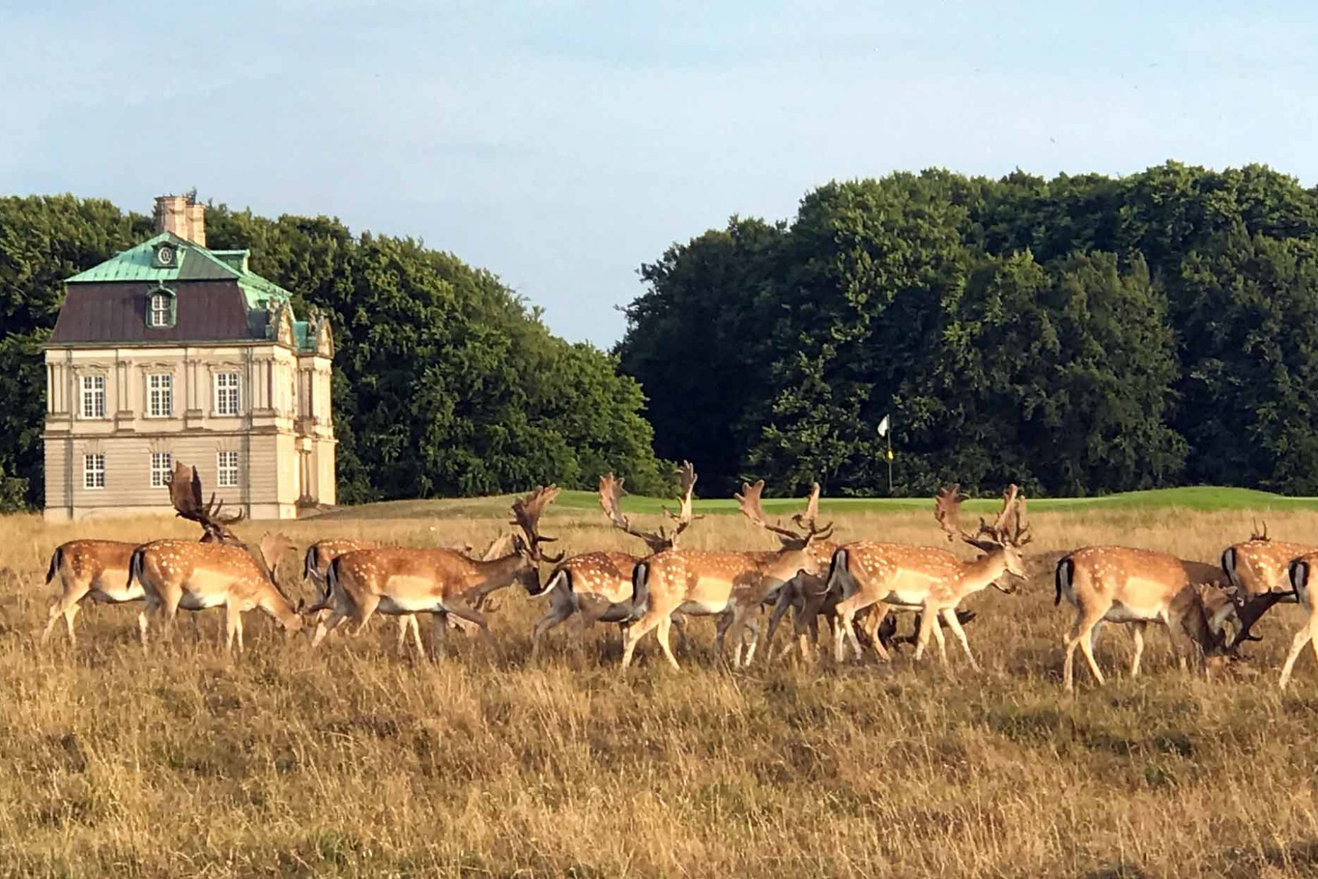 koebenhavns-golf-klub-dyrehaven